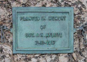 AYLIFFE, James Hamilton (Army 260), image plaque Norfolk Island Pine